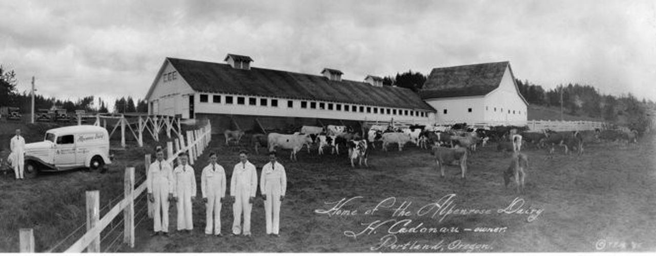Home of the Alpenrose Dairy